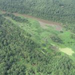 Miller County Timberland for sale