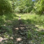 Timberland property for sale in Miller County