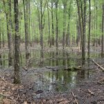 Hunting land for sale in Miller County