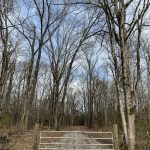 Hunting land for sale in Hempstead County