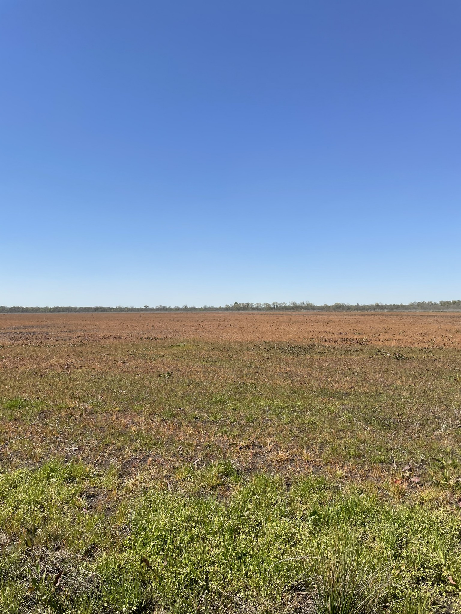 Little River County Ranchland property for sale