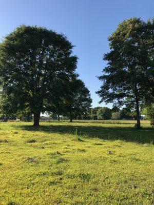 Development property for sale in Beauregard Parish