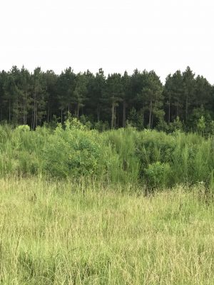 Development property for sale in Beauregard Parish