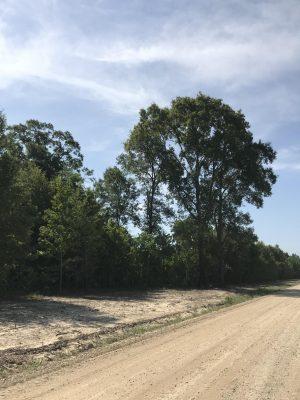 Beauregard Parish Ranchland for sale