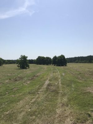 Investment property for sale in Beauregard Parish