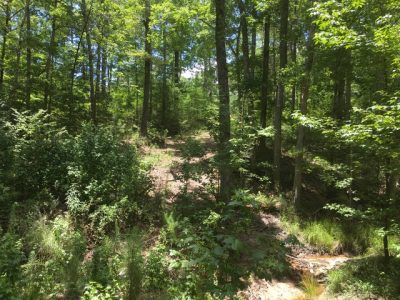 Sabine Parish Timberland property for sale