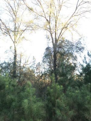Vernon Parish Recreational land for sale