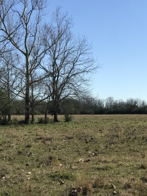 Ranchland for sale in Evangeline Parish