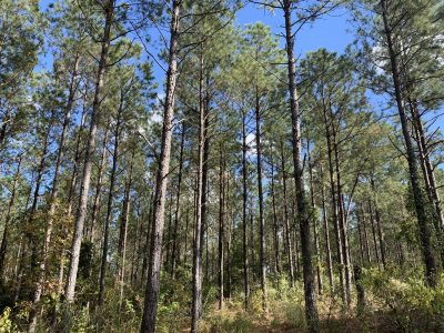 Timberland for sale in Claiborne Parish