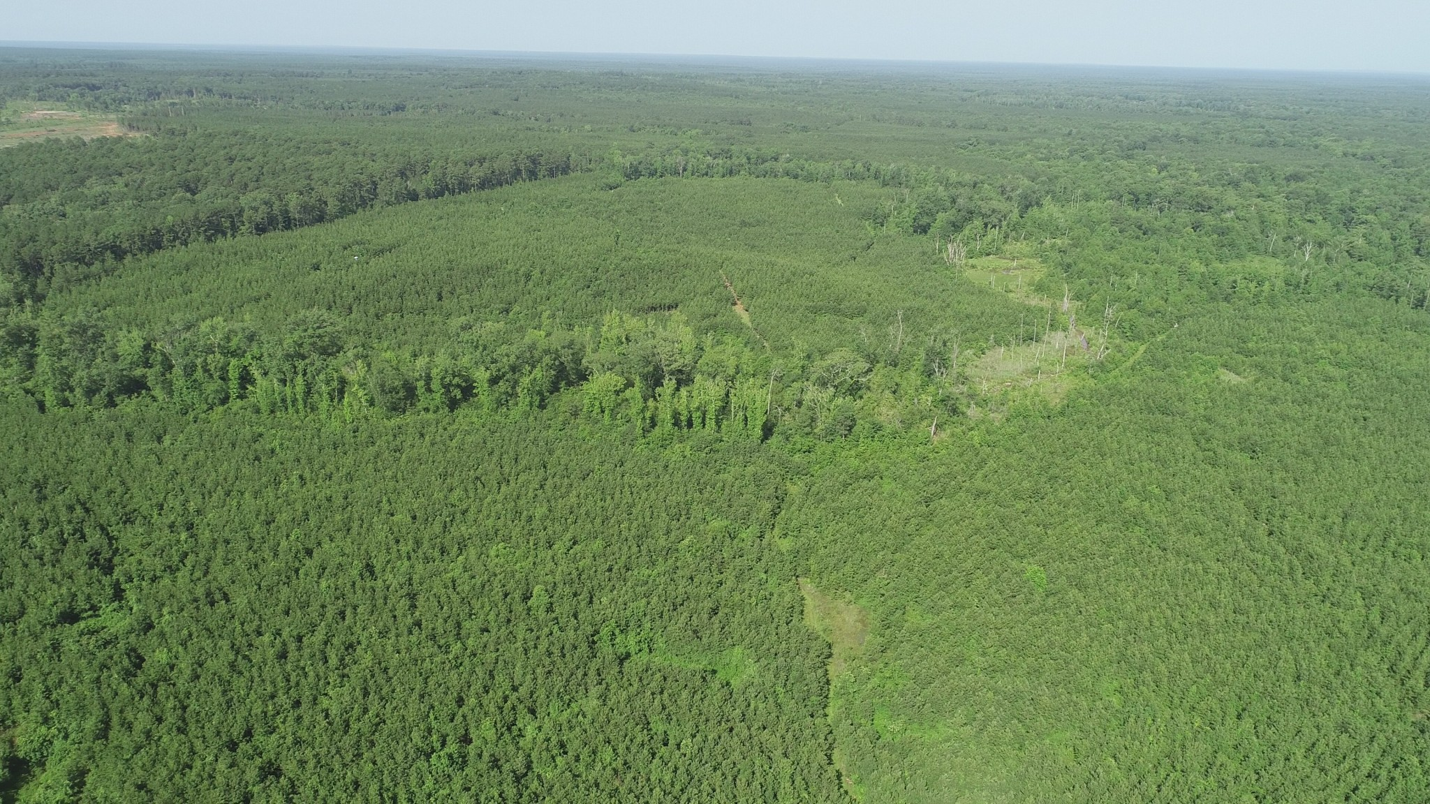 Investment land for sale in Webster Parish