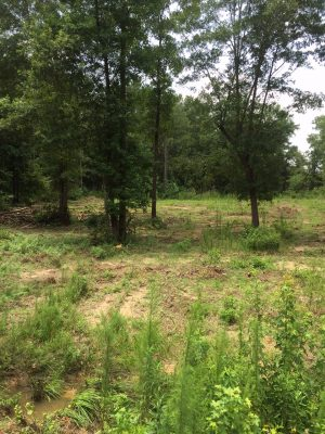 Lincoln Parish Investment land for sale