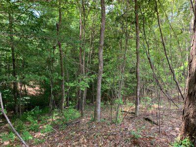 Development land for sale in Lincoln Parish