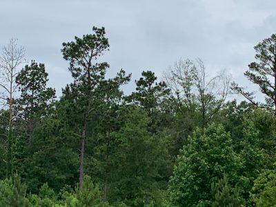 Development land for sale in Jackson Parish