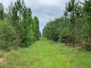 Fox Camp Tract, Jackson Parish, 46 Acres +/-