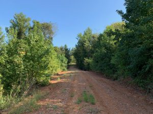 Sharon Road Tract, Lincoln Parish, 66 Acres +/-