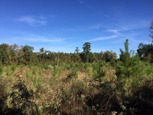Girl Scout Tract North, Bienville Parish, 30 Acres +/-