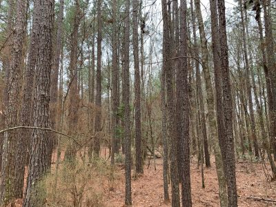 Mars Hill Tract, Union Parish, 54 Acres +/- LAUNIOJP54