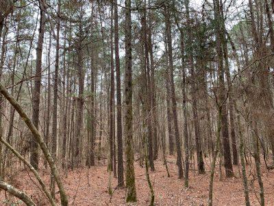 Mars Hill Cemetery Tract, Union Parish, 41 Acres +/-