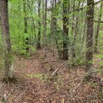 Timberland for sale in Jackson Parish
