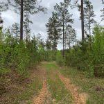 Jackson Parish Investment land for sale