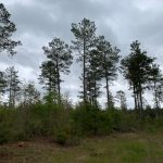 Jackson Parish Hunting land for sale