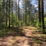Timberland for sale in Lincoln Parish