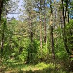 Recreational land for sale in Lincoln Parish