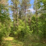 Timberland property for sale in Lincoln Parish