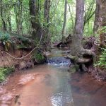 Hunting property for sale in Lincoln Parish