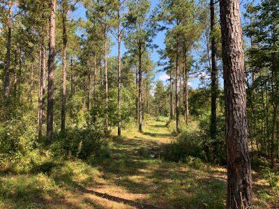 Recreational land for sale in Jackson Parish