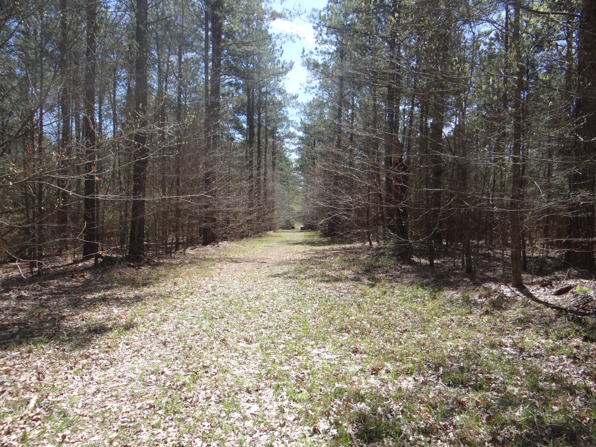 Couchwood Road Tract, Webster Parish, 156 acres +/-