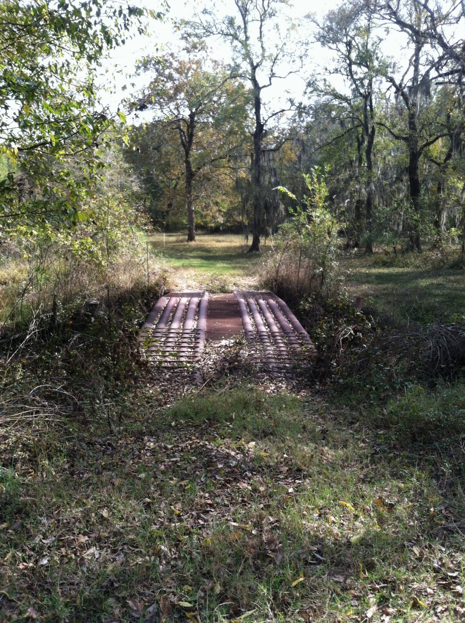 Bayou Dorcheat Tract, Webster Parish, 320 Acres +/-