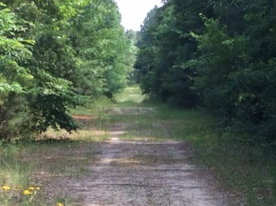 Flora Timber Tract, Natchitoches Parish, 1051 Acres +/-
