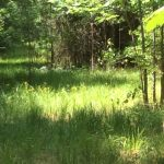 Investment land for sale in Natchitoches Parish