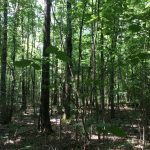 Investment property for sale in Natchitoches Parish