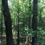 Natchitoches Parish Investment property for sale