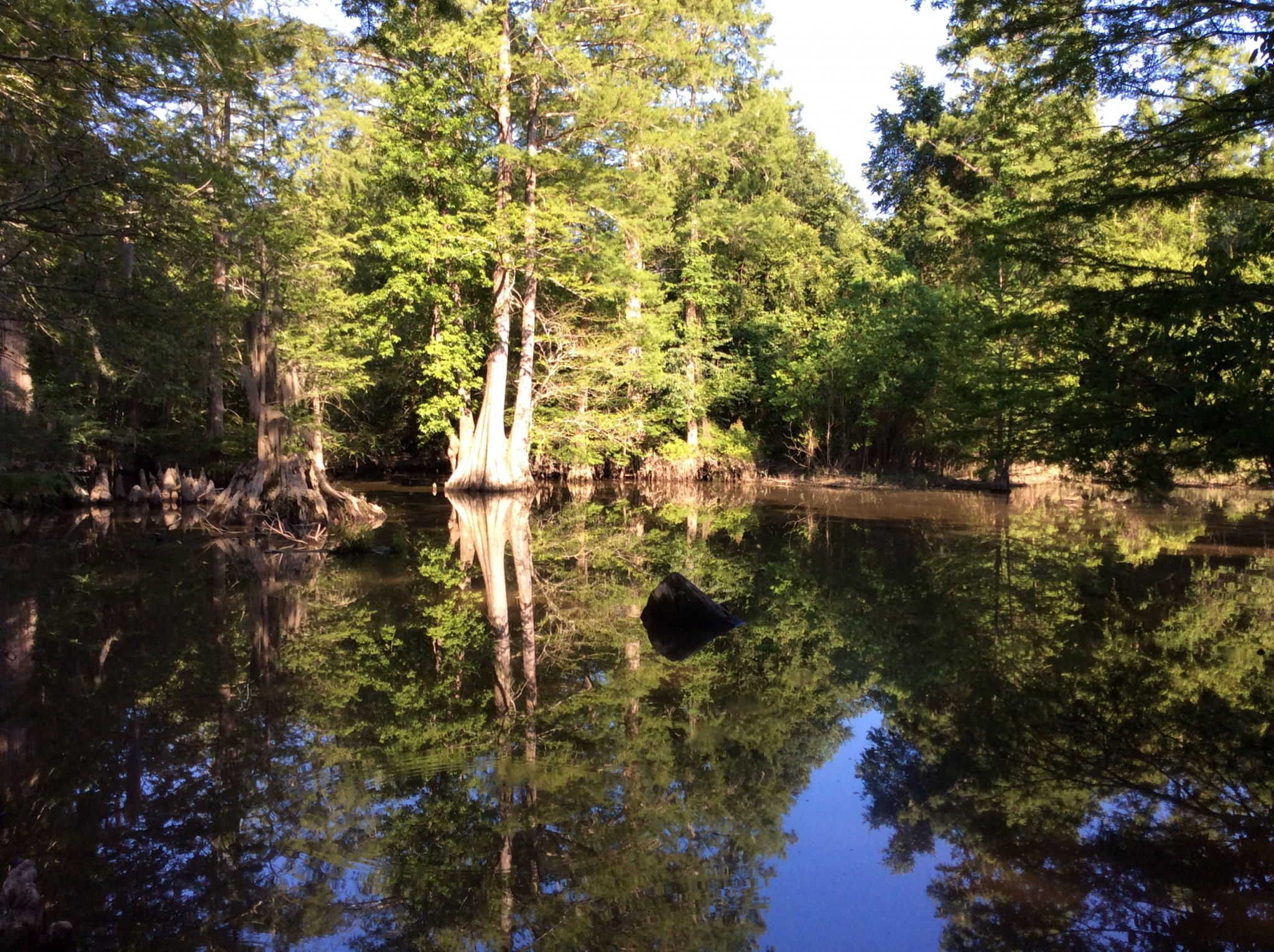 Castor Creek Tract, Caldwell Parish, 350 Acres +/- | Mossy Oak
