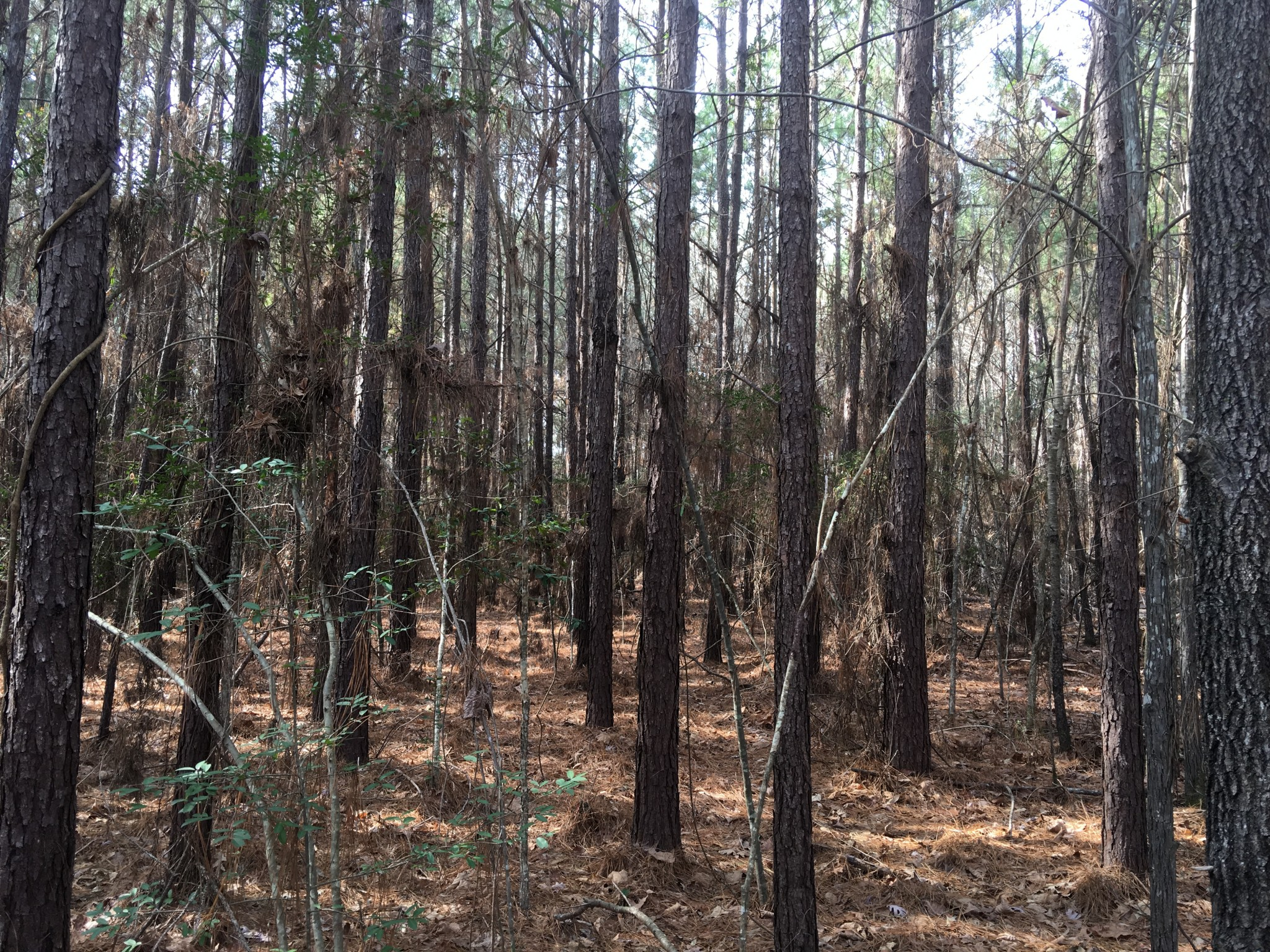 Knight Tract, Covington County, MS,16 Acres +/-