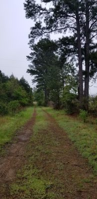 Sabine Parish Investment land for sale