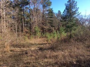Moore Cemetery Road Tract, Grant Parish, 13 Acres +/-