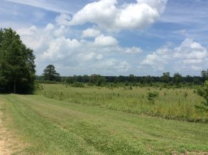 Dry Branch Tract, Red River Parish, 68 Acres +/-