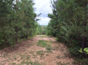 Callahan Branch Tract, Catahoula Parish, 130 Acres +/-