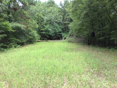 Catahoula Parish Timberland for sale