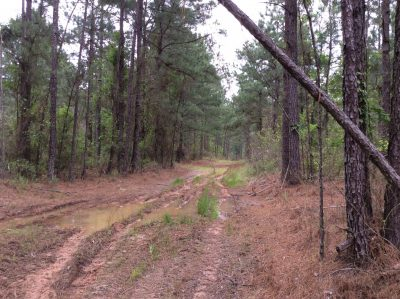 Winn Parish Recreational land for sale