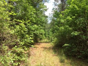 Mile Branch Tract, Winn Parish, 20 Acres +/-