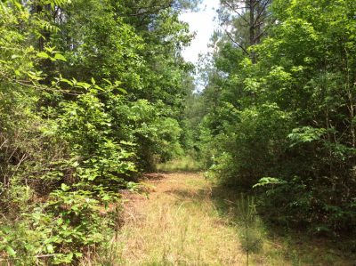 Winn Parish Timberland property for sale