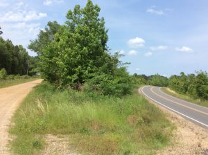 Gaar Road Tract, Winn Parish, 33 Acres +/-