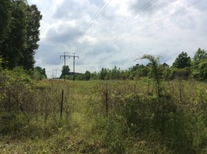 Hunter Road Tract, Winn Parish, 35 Acres +/-