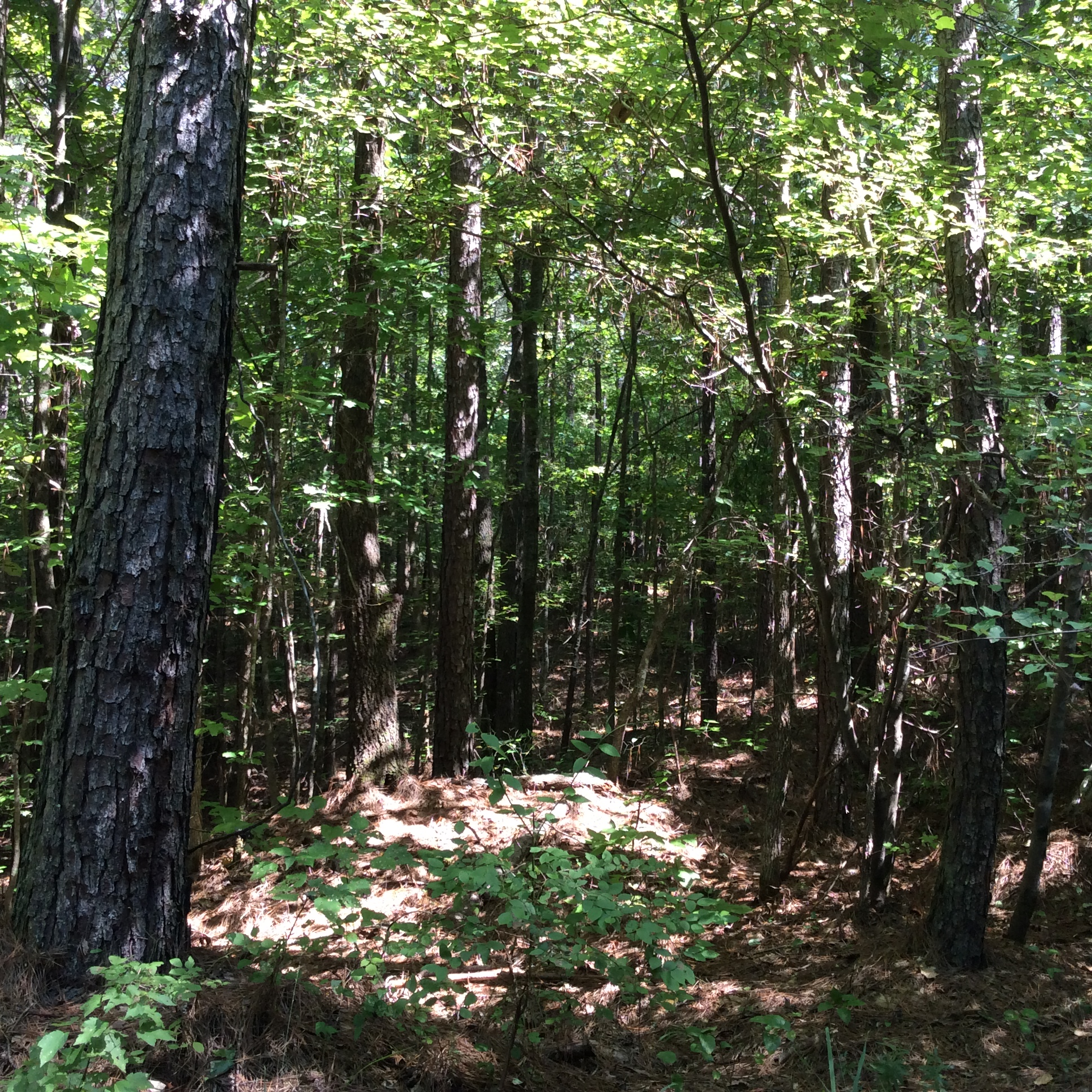 Grant Parish Recreational property for sale