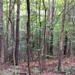 Timberland for sale in Grant Parish
